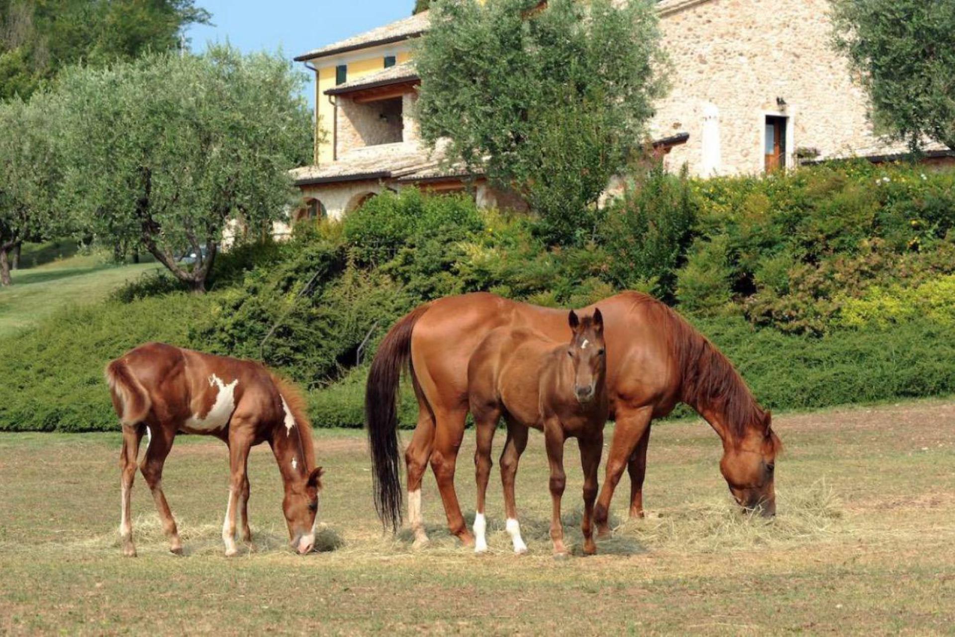 Agriturismo Comer See und Gardasee Agriturismo Gardasee - Urlaub mit eigenem Pferd   myitalyselection.de