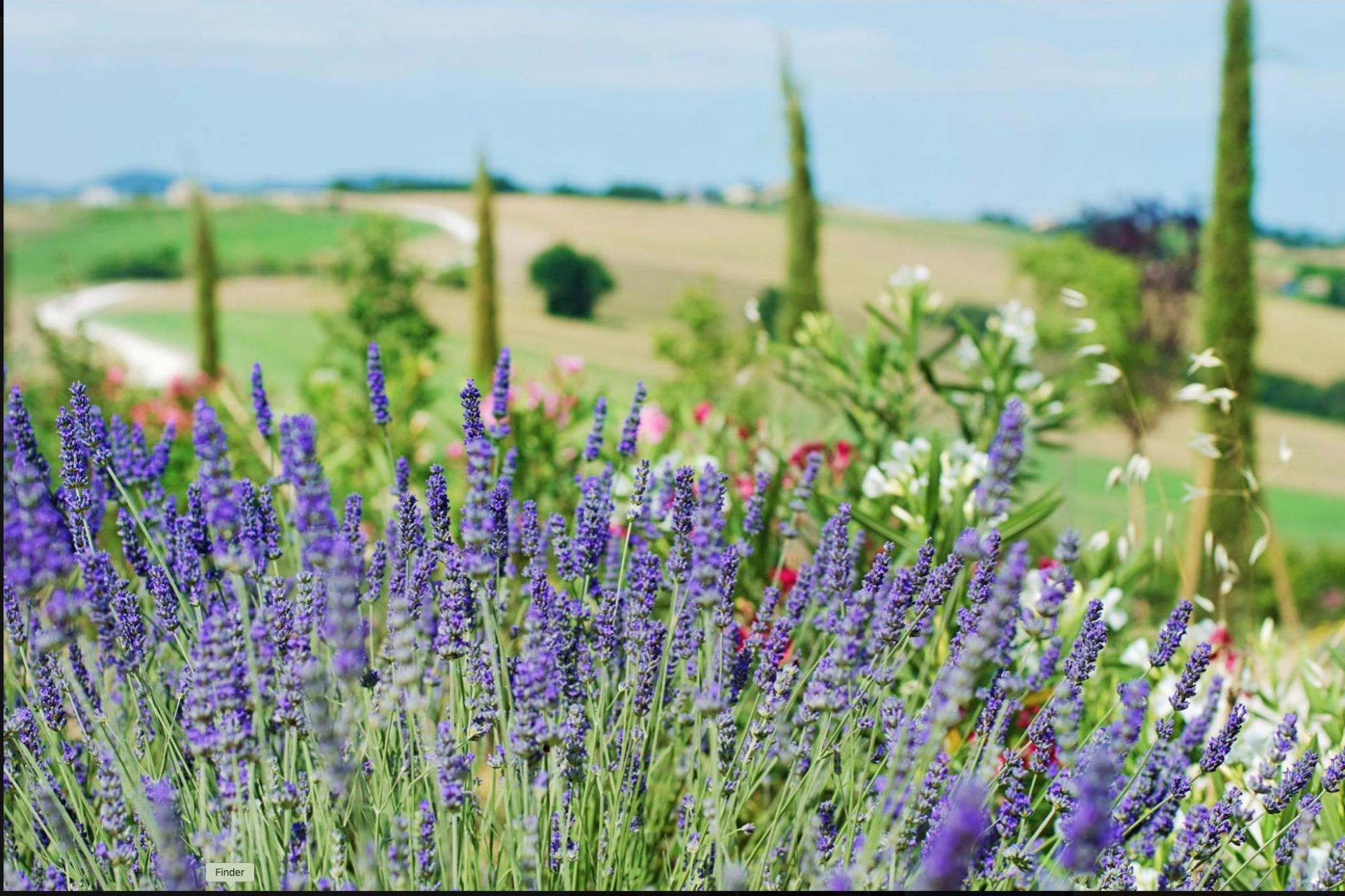 Agriturismo Marken Wunderschön gelegenes Landhaus mit Bistro